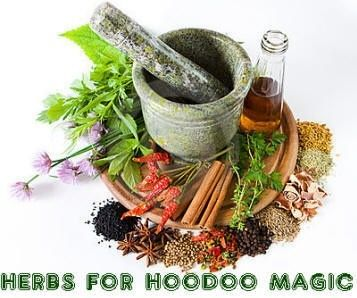Herbs for Hoodoo Magic...A page on some of the herbs used in Hoodoo