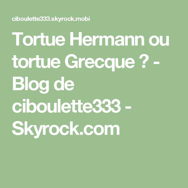 Tortue Hermann ou tortue Grecque ? - Blog de ciboulette333 - Skyrock.com