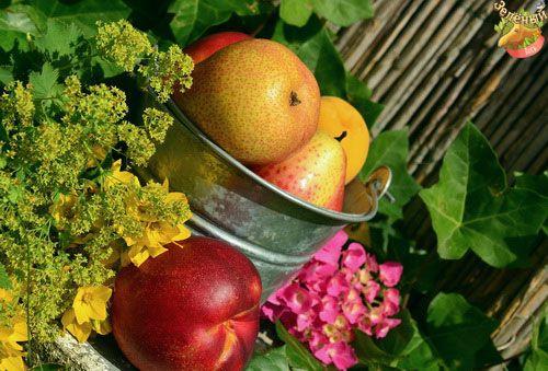 #Веганство #Вегетарианство #goVegan #greenelk #Vegan #greenelkshop  Не секрет, что сейчас люди осмысленно переходят на правильное питание, отказываясь от жаренного, вредного и мясного. А наша новая статья поможет вам ориентироваться в продовольтсвенном изобилии нашего времени, выбирая экологические и полезные продукты! Очень много нужной информации для начинающих веганов!  Экологически чистые продукты – это полезная для здоровья пища, не вредящая окружающей среде. Выбор продуктов питания –…