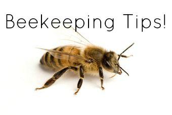 Tips on Beekeeping