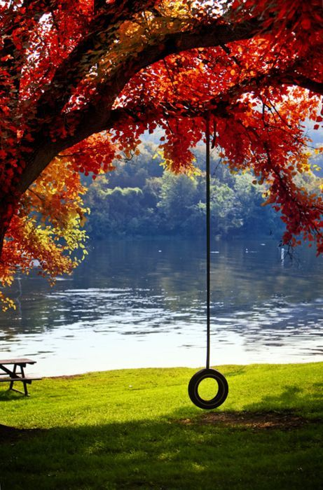 Under a ceiling of red fall leaves.  Classic fall tire swing.