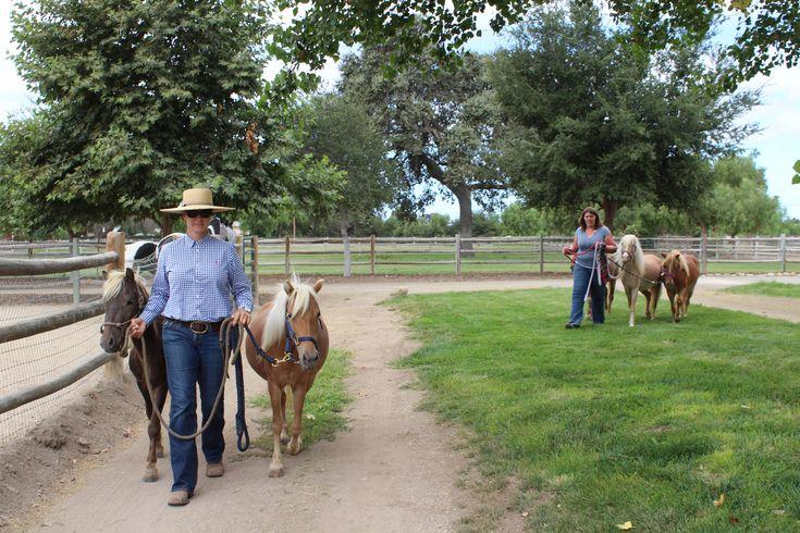 Local women rescue, train herd of miniature horses