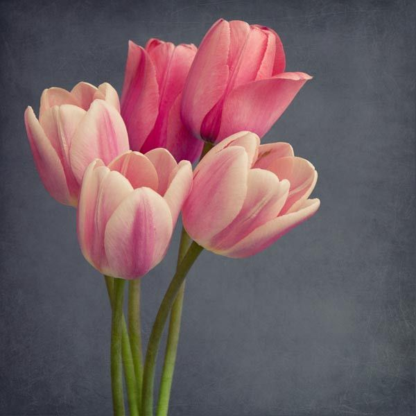 best  flower photography ideas on   spring, Beautiful flower