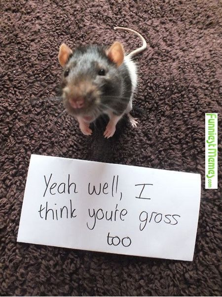 Image result for pet rat funny