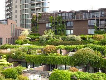 Groene woonwijken - voor een groenere leefomgeving