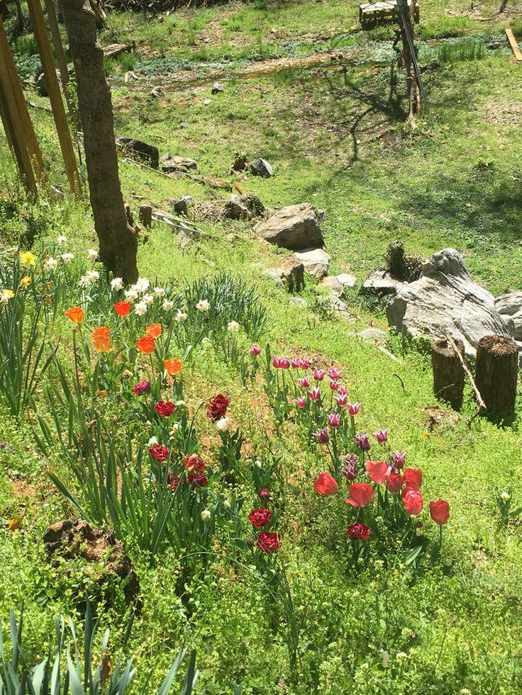 My husbands flowers Plants, Outdoor, Farmland