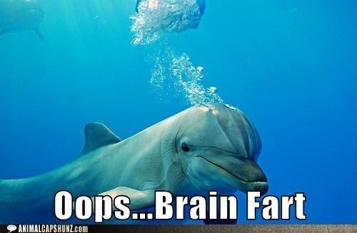 brain fart: Laughing, Brainfart, Dolphins, Funny Stuff, Humor, Funny Animal, So Funny, Funnystuff, Brain Farts