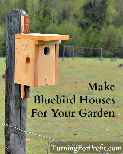 Help the bluebird find a new home. All it takes is one board and you can build a bluebird house. An easy woodworking project.