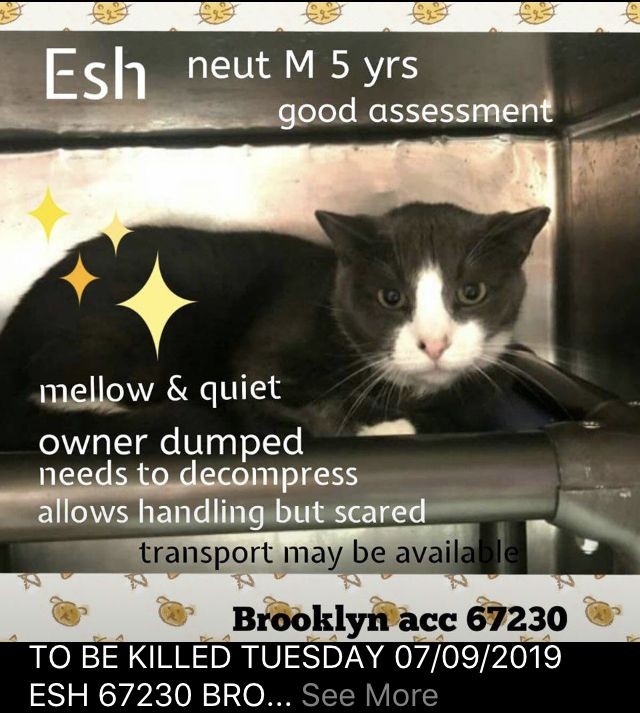 Esh Rescued 07 09 19 To Die 07 09 19 With Images Cat Help Cat Rescue