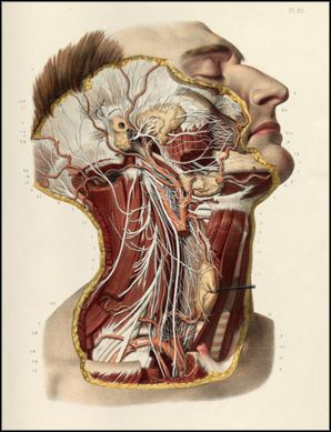 Anatomical plates from the Thomas Fisher Rare Book Library