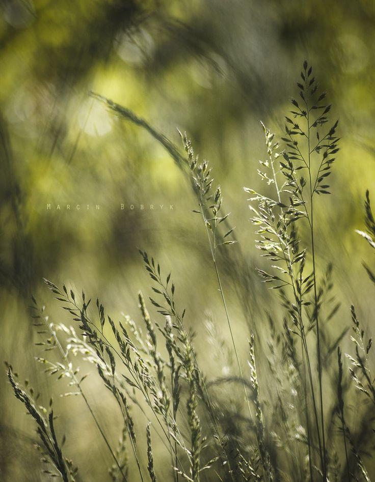 W trawie coś piszczy