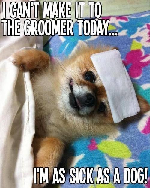 b69456b8d00bc582998611503cd5ae32 pet memes dog grooming 60 best cute pet memes and quotes images on pinterest pet memes,Cute Sick Memes