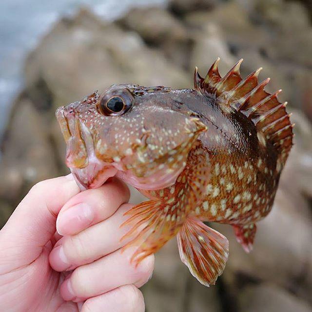 【smr.o417】さんのInstagramをピンしています。 《* * #アラカブ #カサゴ #ガシラ #ロックフィッシュ #ロックフィッシング #根魚釣り #とも言う #元祖はこっちな笑 #釣り #海 #釣りガール #釣り女 #カメラ女子 #sea #fish #fishing #fishinglife #rockfish #rockfishing #photoofday # * * * 例の人に削除するようDMしたけど、まだ既読ならんし返事来ん笑 けど、絶対に見とるやろねー 返事返さなくていいからせめて削除してー。 ブログの運営会社に通報したら、インスタのアカウント名やURL貼られるくらいだと即時違反になんないから、印鑑証明書やら必要書類送れと。 それで、削除するかしないか判断するって。 おいおい、なんでコメントの削除を依頼するのに、こっちがわざわざ時間とお金と体力使わんばいけんと? しかも、書類提出しても削除してくれるかもわからんとばい。 おかしくない? 嫌な思いしてんのに、理不尽じゃない?笑 絶対にそんなことしたくないけん、 はよ消してくれんかな。 はーまじ苛っ。笑》