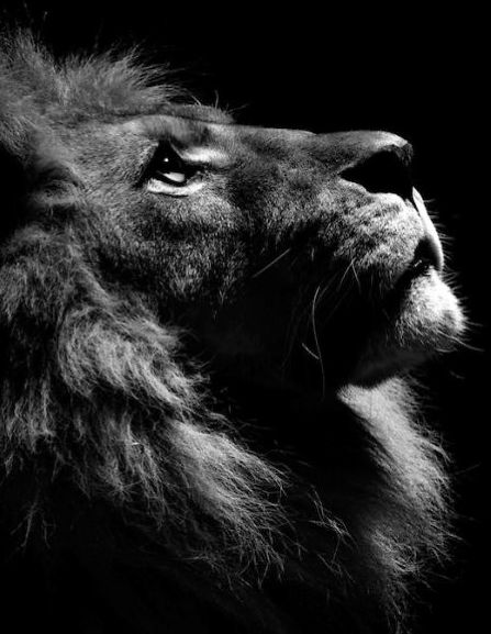 Gorgeous B&W Animal Portraits That Were All Shot In A Local Zoo