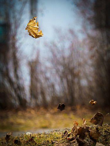 A leaf in the wind Photo - Visual Hunt