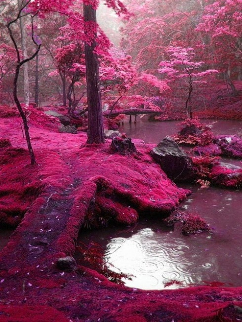 Pink Moss Bridges, Kyoto,Japan: One Day, Forests, Fairies, Ireland, Parks, Be Real, So Pretty, Moss Gardens, Kyoto Japan