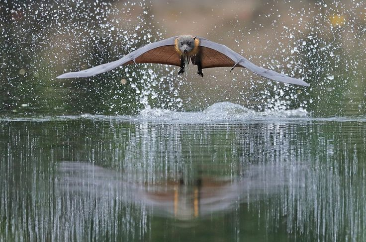 Levitation by Michael Cleary on 500px