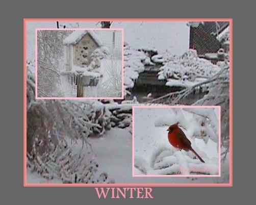 """Winter"" photo by Joy Fussell"