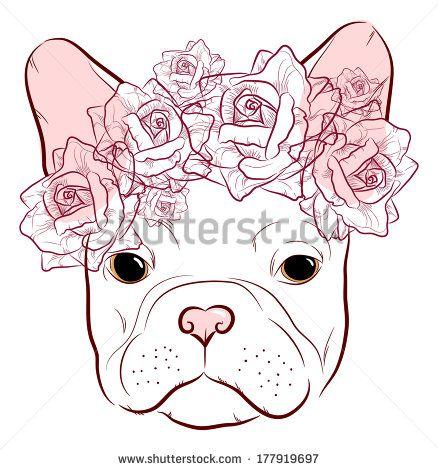 French Bulldog Stockfotos, French Bulldog Stockfotografie, French Bulldog Stockbilder : Shutterstock.com