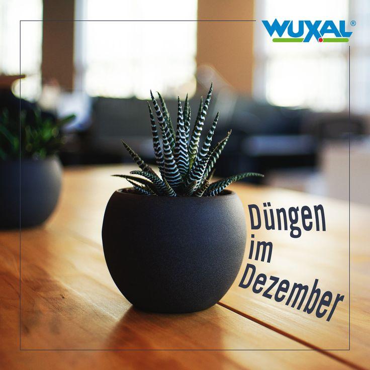 Die Besten 17 Bilder Zu Tipps, Ernten, Säen, Pflanzen Im November ... Garten Im November Tipps Pflege