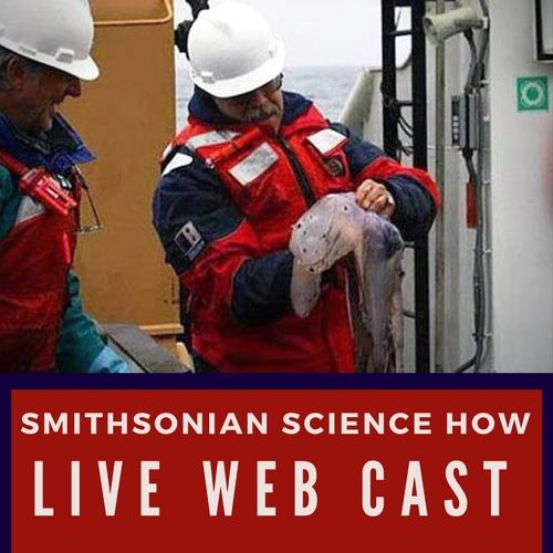 Join us in the Tellus Theater for a live web cast as we meet Dr. Mike Vecchione, a NOAA zoologist at the National Museum of Natural History.
