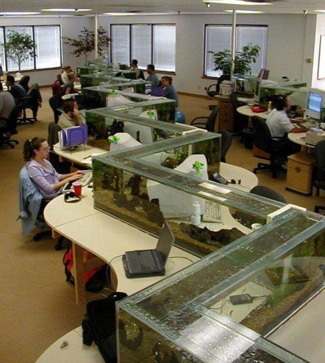 software company office. employees at the freshwater software company office in boulder colorado had this amazing fishtank o