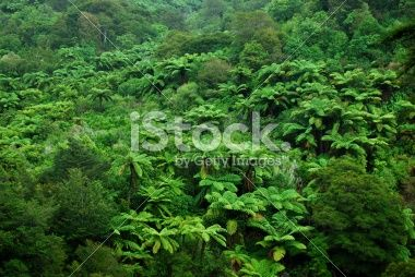 Native Bush Background, NZ Royalty Free Stock Photo