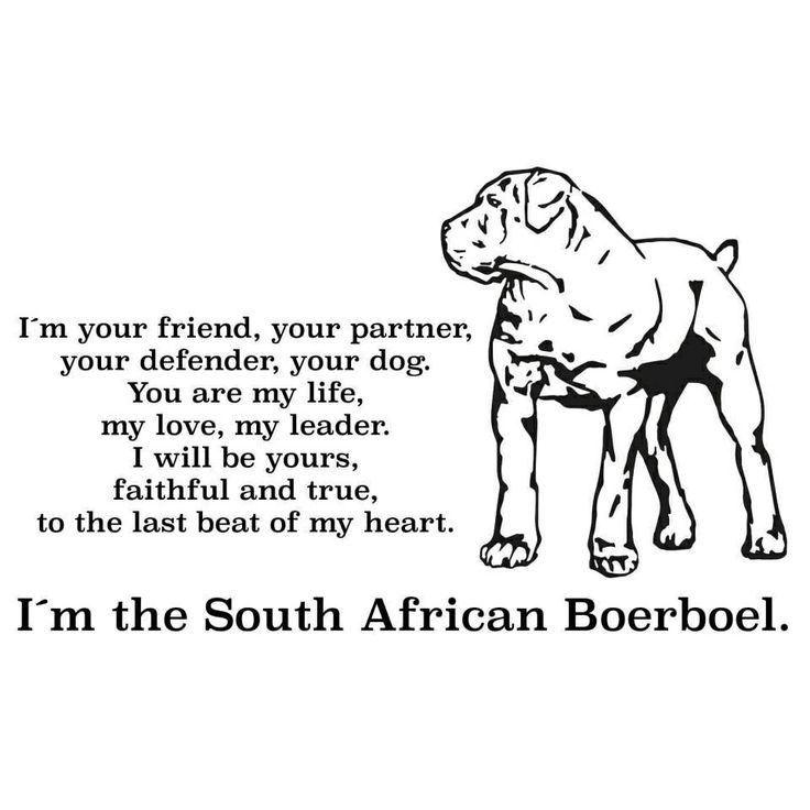 "Boerboel, I met one of these dogs at my work, recently. Not ever knowing about this breed, I mistook him for a Mastiff. But I kept saying ""This is the biggest and most beautiful mastiff I have ever seen!"" Turns out he wasn't a mastiff at all. But a South African dog, raised to protect farmers and their homestead. That is so awesome!"