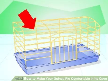 Image titled Make Your Guinea Pig Comfortable in Its Cage Step 1