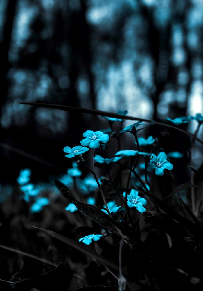 Pin By Hidden Little Stories On Cool Background Images Wallpapers Nature Photography Photo Background Images Blur flower background images hd