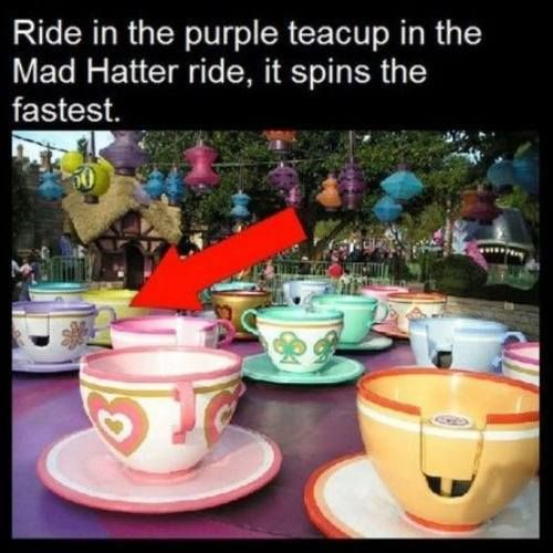 disney facts 8 Disney World facts (11 photos)