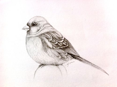bird sketch | Tumblr