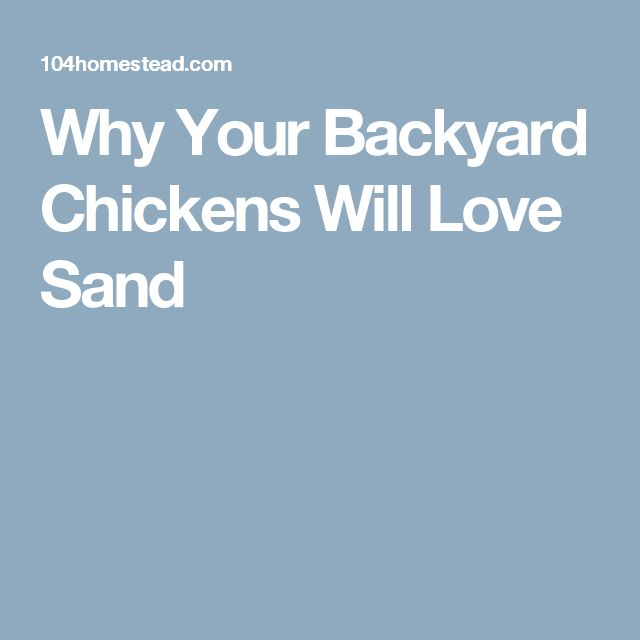 Why Your Backyard Chickens Will Love Sand