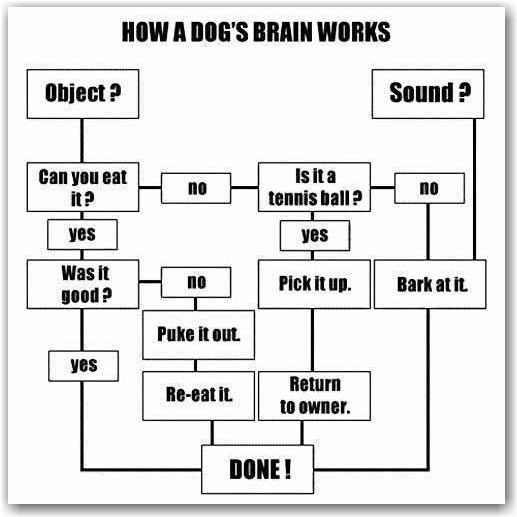 88 Best Flow Charts Images Flowchart Ha Ha