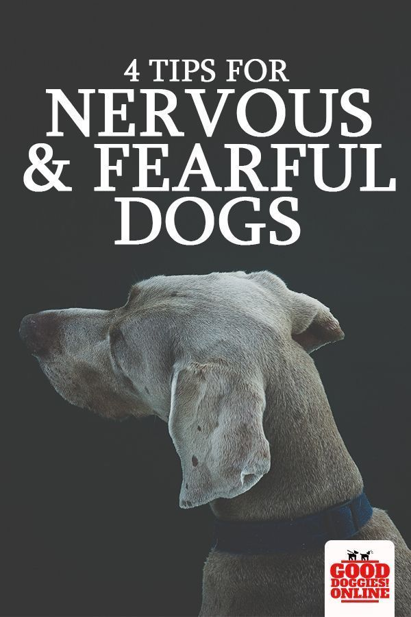 4 Tips For Nervous And Fearful Dogs Dog Training Dog Training