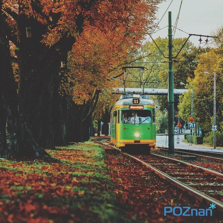 Jesienna bimma [fot. M. Marciniak] #autumn #poznan #poland