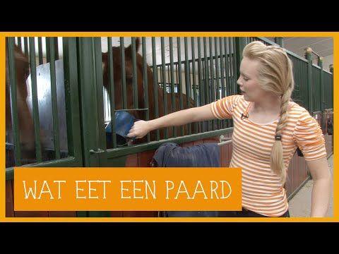 Wat eet een paard?   PaardenpraatTV - YouTube