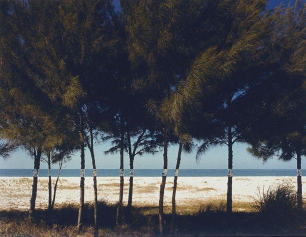 Australian Pines, Fort De