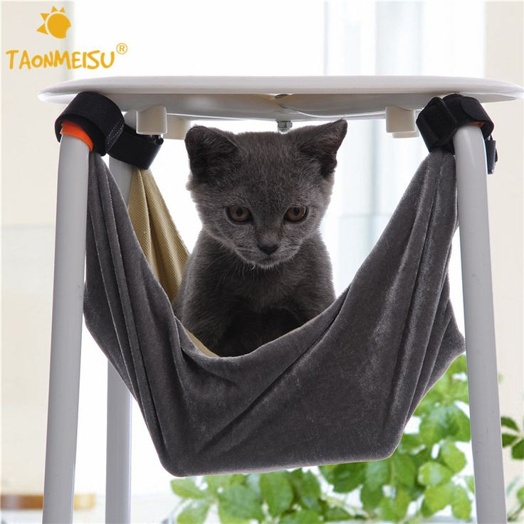 es.aliexpress.com store product Pet-Kitten-Cat-Hammock-Removable-Velcro-Hanging-Soft-Bed-Cages-for-Chair-Kitty-Rat-Small-Pets 1797792_32725735578.html?spm=2114.04010208.3.3.YsXMq1&ws_ab_test=searchweb0_0,searchweb201602_2_10152_10065_10151_10068_10136_10137_10060_10138_10062_10153_10141_10056_10055_10054_10059_124_10099_10103_10102_10096_10148_10147_10052_10053_10142_10107_10050_10143_10051_10084_10083_10080_10082_10081_10110_10111_10112_10113_10114_10037_10078_10079_10077_10073...