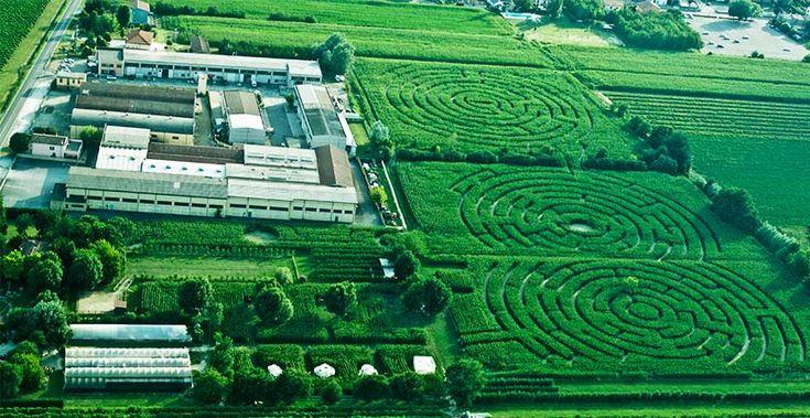 Il labirinto effimero in un campo di mais più grande del mondo si trova ad Alfonsine, Ravenna. Un gioco iniziato da Carlo Galassi nel 2007