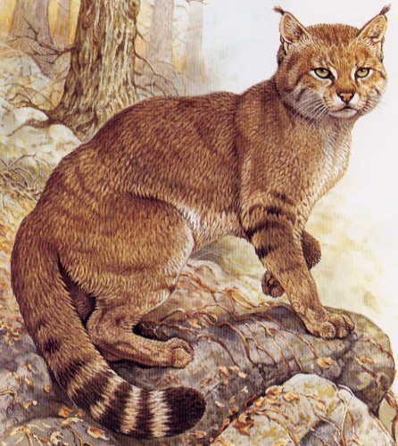 nebelung cat patronus meaning