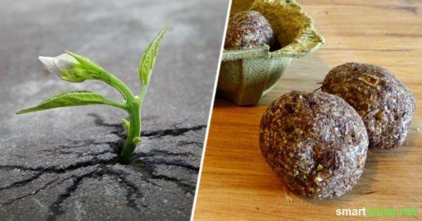 Samenbomben (Seedbomb) einfach selber machen und deine Stadt begrünen