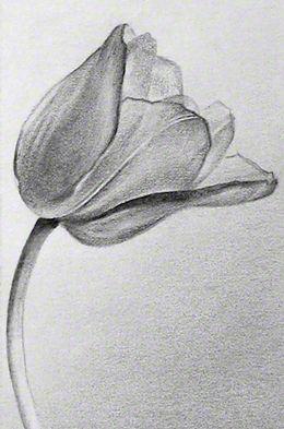 Art | Carolyn Antl