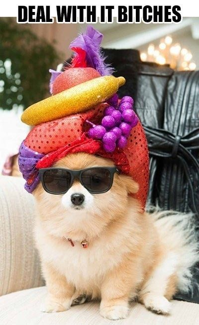 Fabulous pomeranian
