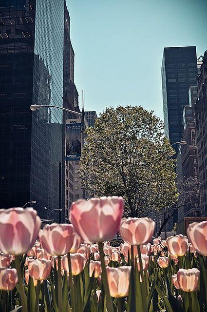 Tulips on Park Avenue, New York.