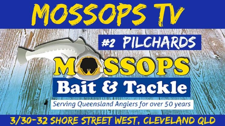 MOSSOPS TV #2 PILCHARDS