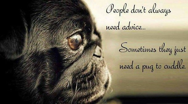 People don't always need advice.  Sometimes they just need a pug to cuddle.
