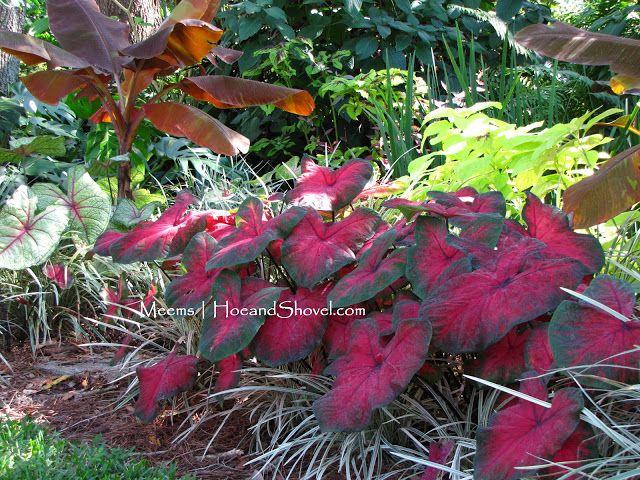 Hoe and Shovel: Delicious Autumn