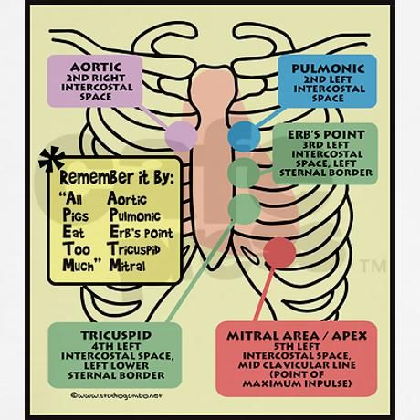 When using a stethoscope to listen to the heart, these are the points to place the microphone end of the stethoscope in order to hear the various sounds of the heart most accurately.