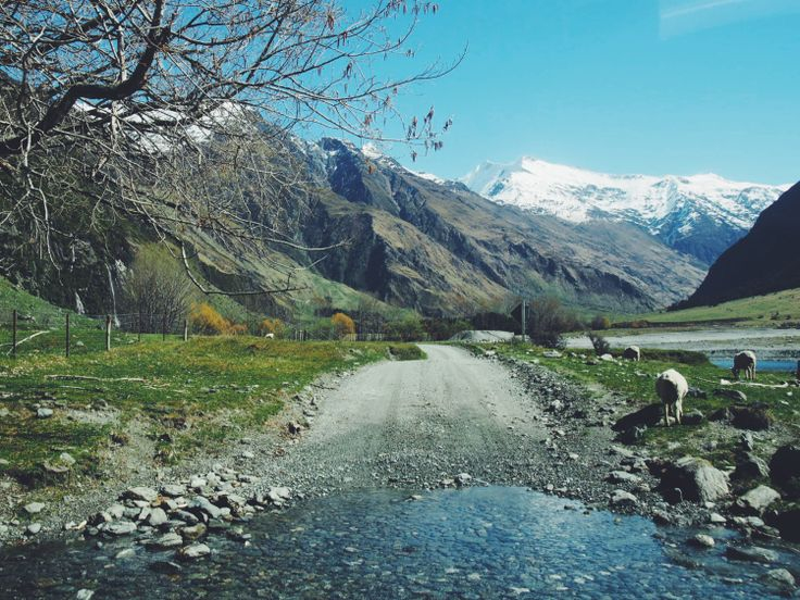 Mount Aspiring National Park, New Zealand | http://wander-full.com/2014/12/29/4-glaciers-waterfalls-a-scenic-hike-along-the-rob-roy-track/